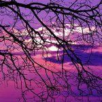 die-farbe-violett