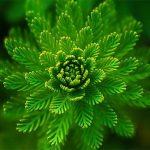 die-farbe-grün